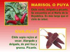 chiles hierbas y especias mexicanas - Buscar con Google