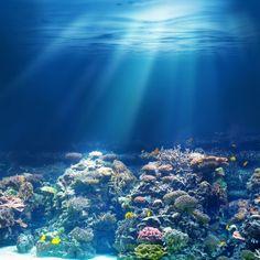 Recifes de corais. Foto: Andrey_Kuzmin / Shutterstock.com