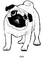 Cute Printable Pug Coloring Page