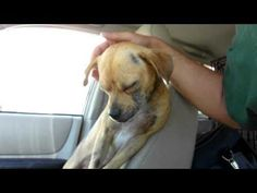 10 Of The Most Life-Affirming Dog Rescue Stories Ever