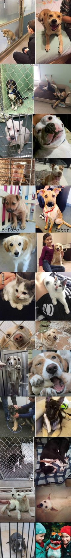 This is why you should rescue your next animal... - Tackk