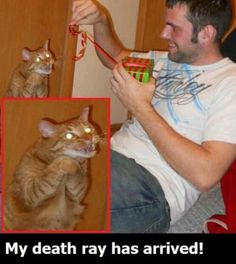 This is why cats are hilarious.