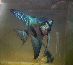 omg. pinoy angel. so cool! | Flickr - kenneth s kennedy