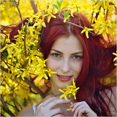 Forsythia by Daywish.deviantart.com on @DeviantArt
