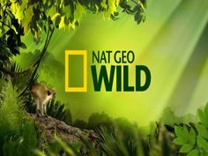 NAT GEO  WILD by Gyula Dio  via slideshare