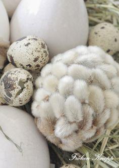 ...Ja på Tvrumsbordet är det riktigt äggigt just nu!!      Ett stort vitt fat, Hö o mängder av ägg   av olika slag...       ...