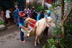 Die Mobile Pferde-Bibliothek - Hilfe gegen Analphabetismus
