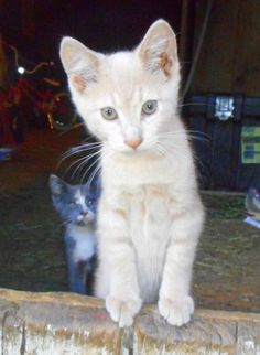 164fe7566c 3050 Best Kittens So Cute images