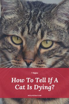 As we all know, cats may exhibit specific signs of pain when they are going to die. How to identify and interpret the signs of dying in cats? Feeling Sick, Feel Tired, How Can I Get, How To Know, Losing You, Losing Weight, Bad Body Odor, Sick Cat, Cat Signs