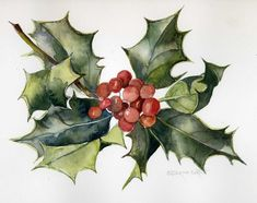 holly leaves and berries - watercolor by Catherine Bartle, Christmas 201