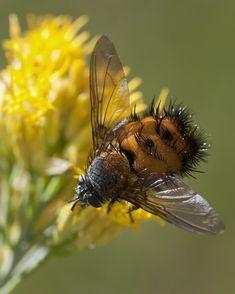 Macro bee - amazing photo from textless
