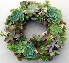 "Corona navideña de suculentas Live Succulent Wreath on 12 inch diameter frame, from ""Fairyscape"". Made using succulents and organic soil wrapped around with moss. Will continue to bloom and grow with watering (once a week) and some sun exposure."