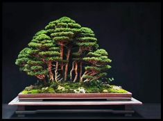 How Herb Back Garden Kits Can Get Your New Passion Started Off Instantly Bonsai Bonsai Forest, Bonsai Art, Bonsai Plants, Bonsai Garden, Bonsai Trees, Bonsai Soil, Indoor Bonsai, Ficus, Terrariums