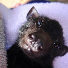 Baby bat...this reminds me of my dog, so much...lol.....#hiphop #beats updated…