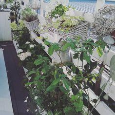 Ohne Worte 🌷  #interior #garden #balkon #flowers #terasse #draussenliebe #blumen #hortensien #allinwhite Scuba Diving, Flowers, Plants, Garden, Models, Watch, Instagram, Style, Interiors
