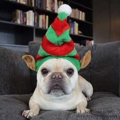 This Little Elf Doesn't Want to Sit on a Shelf | via Tumblr dogs -  dog trainers -  #nyc