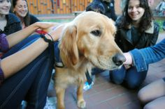 Comfort Dogs Come To Boston: Meet Maggie, Addie, Luther, Ruthie, and Isaiah — the five golden retrievers trying to help Bostonians recover after the marathon bombings.