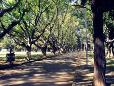 The best - Pq. Ibirapuera
