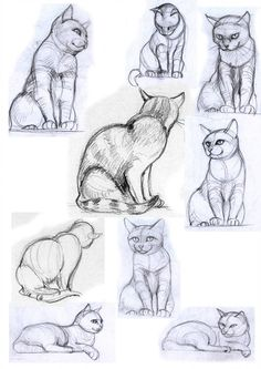cat poses cat poses II by jennomat - cat Cat Reference, Art Reference Poses, Drawing Reference, Animal Sketches, Animal Drawings, Drawing Sketches, Cute Cat Drawing, Cute Drawings, Arte Steampunk