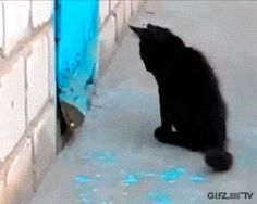 Extremely intelligent cat helps dog escape!! #gif #cat #dog #kitten #CatAndDog