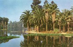Echo_Park_Los_Angeles.jpg (1045×678)