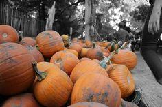 Vala's Pumpkin Patch Theme: how do pumpkins grow? seed, vine, plant