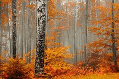 Welcome to the orange wood - Evgeni Dinev Beautiful Landscape Photography, Beautiful Landscapes, Beauty Photography, Photography Ideas, Autumn Forest, Autumn Cozy, Early Autumn, Walk In The Woods, Ciel