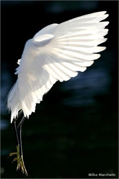 """You may not know where you're going, but you know that so long as you spread your wings, the winds will carry you."""""""