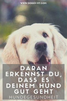 Gibt es bestimmte Punkte, an denen man sehen kann, ob der Hund gesund ist?! Ja, klar! Wir haben wir dich wichtigsten Fakten zusammengefasst.gesunder Hund | Gesundheitszeichen Hund | Hund gesund | Hundegesundheit | Zeichen gesunder Hund | Hundegesundheit | Hundewissen
