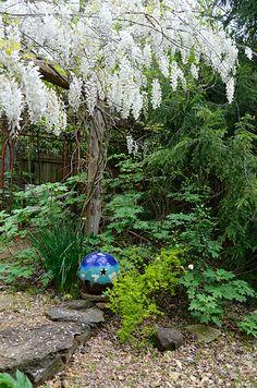 White wisteria (Phillip Oliver/Michael Scott garden, Florence, Alabama)