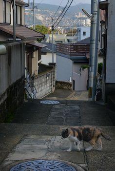 長崎県長崎市ー坂の街・長崎の猫たち
