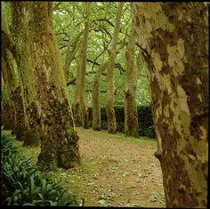Parque das Caldas da Rainha, Portugal
