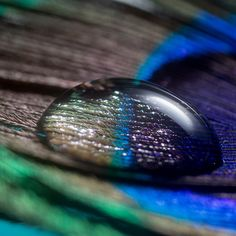 Buy Peacock Feathers Online in Natural Shades Peacock Bird, Peacock Feathers, Craft Work, Cool Photos, Rings For Men, Diy Projects, Wedding Rings, Crafts, Stuff To Buy