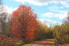Confederation Trail :: West of Winsloe