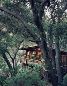 So many reasons to build a treehouse on a slope-great views, stronger trees and easy access. Beautiful example.