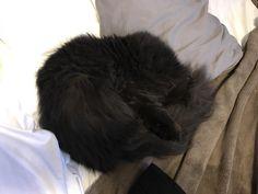 Cat wrap taking cat nap http://ift.tt/2sIORXN