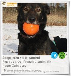 Rex wurde aus gesundheitlichen Gründen im Tierheim Prenzlauer Berg abgegeben.  https://www.tierheimhelden.de/hund/tierheim-prenzlau/mischling/rex/9385-0/  Rex ist sehr laut und ungestüm. Er ist sehr freundlich, benötigt aber noch jede Menge Erziehung.