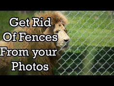 How To Remove A Fence from Your Photos - YouTube