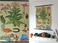 Vintage school pull down chart map tobacco plant by MightyVintage, €205.00