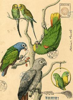 'Sabine's Parrots' by Nick Bantock
