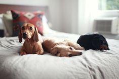 Cute dogs. via Neest