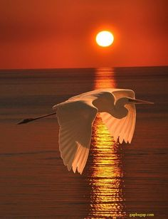 Beautiful Picture Of Bird And Sunset