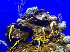 Sjöhästar (Palma Aquarium)