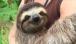 Meet the sloths on Vimeo