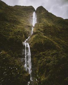 Die 44 Besten Bilder Von Wanderlust La Réunion Cat Flowers