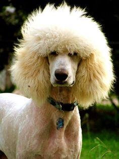 hairdo...