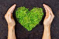 hands holding green heart shaped tree stock photo 33288692 - iStock