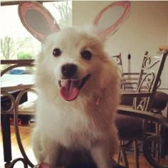 Visit Nylabone's Dog 101 section for information on becoming a dog parent, dog breeds, training, grooming, & health. Puppy Care, Hoppy Easter, Cute Dogs And Puppies, Dog Owners, Pet Birds, Dog Breeds, Corgi, Pets, Mom