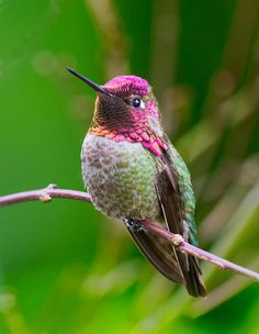 Hummingbird  By Michael Peterson