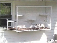 """Creative """"Catio"""" enclosures keep cats safe in their yards Don't have a patio? Even small spaces can afford a cat some safe outdoor time. These cats walk right out the window onto a small cat terrace. Cat Run, Cat Walk, Cage Chat, Outdoor Cat Enclosure, Cat Cages, Outdoor Cats, Animal Projects, Space Cat, Cat Furniture"""